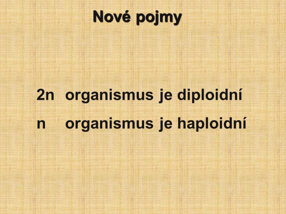 Nové pojmy 2n organismus je diploidní n organismus je haploidní