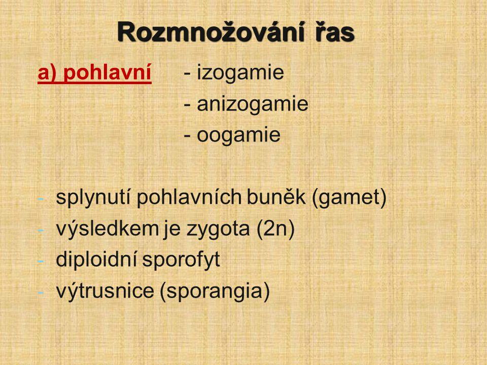 Rozmnožování řas a) pohlavní - izogamie - anizogamie - oogamie