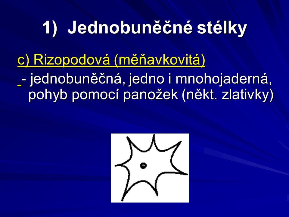 1) Jednobuněčné stélky c) Rizopodová (měňavkovitá)