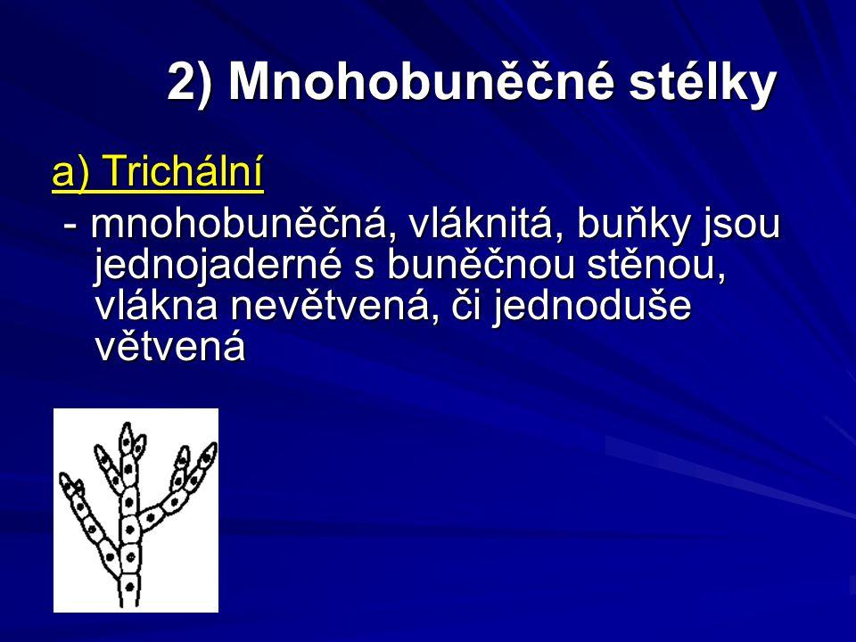 2) Mnohobuněčné stélky a) Trichální