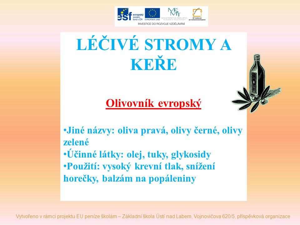 LÉČIVÉ STROMY A KEŘE Olivovník evropský