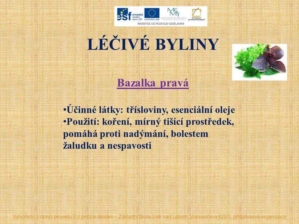 LÉČIVÉ BYLINY Bazalka pravá Účinné látky: třísloviny, esenciální oleje