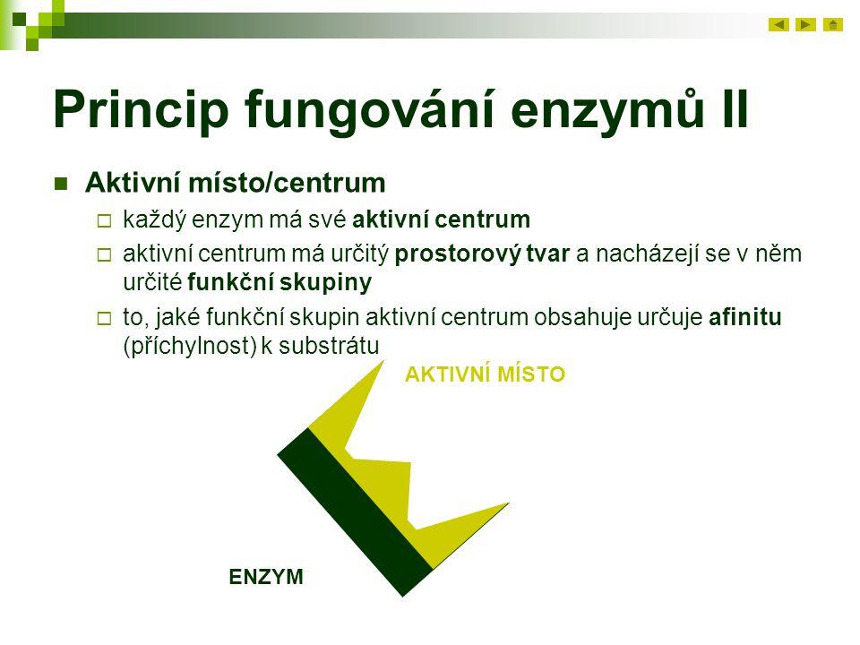 Princip fungování enzymů II