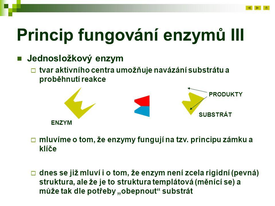Princip fungování enzymů III