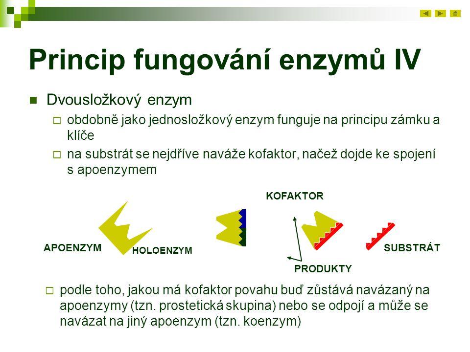 Princip fungování enzymů IV