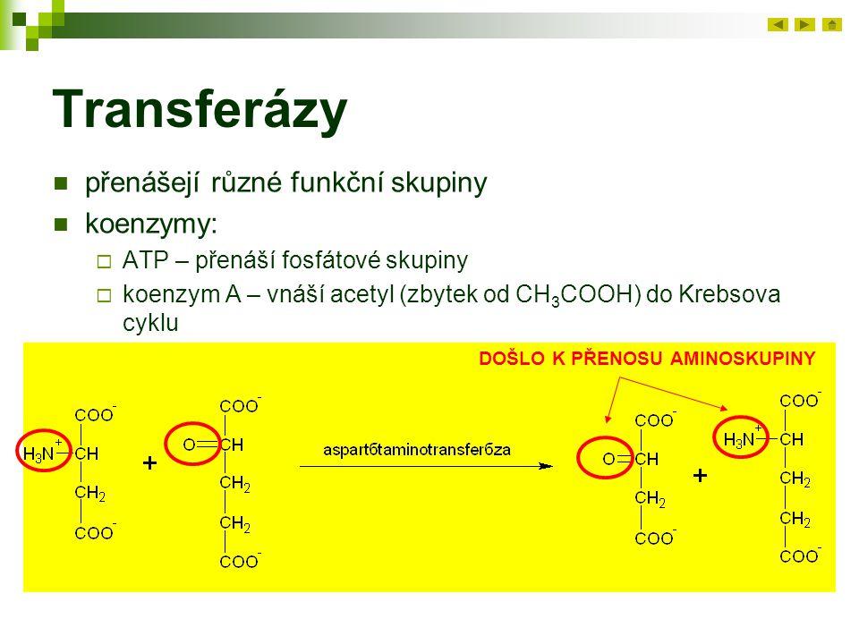 Transferázy přenášejí různé funkční skupiny koenzymy: