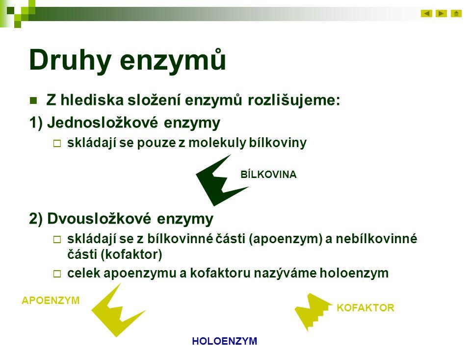 Druhy enzymů Z hlediska složení enzymů rozlišujeme: