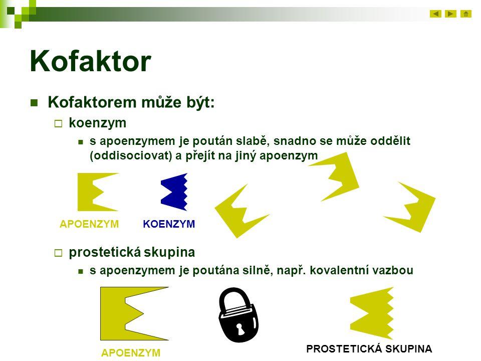 Kofaktor Kofaktorem může být: koenzym prostetická skupina