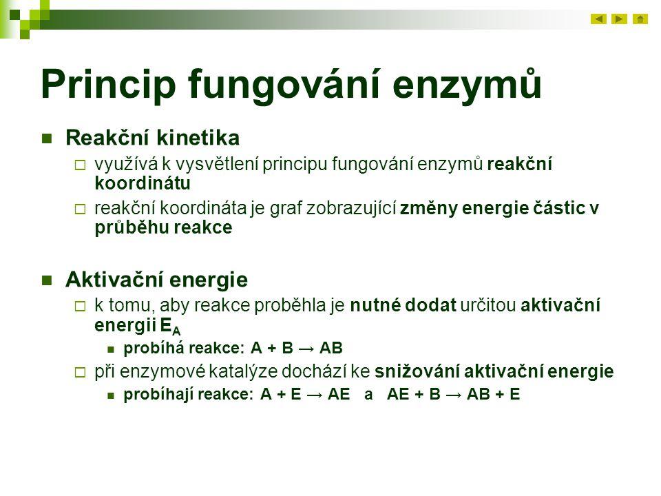 Princip fungování enzymů
