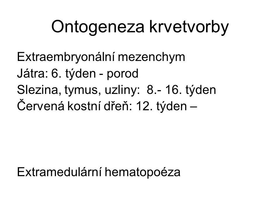 Ontogeneza krvetvorby
