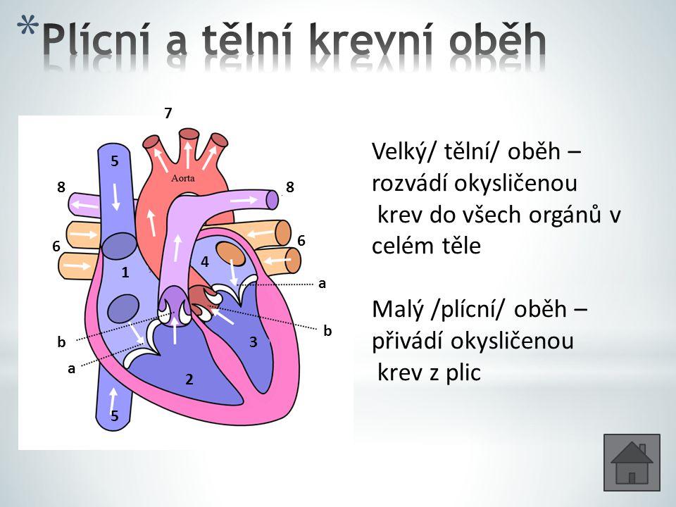 Plícní a tělní krevní oběh
