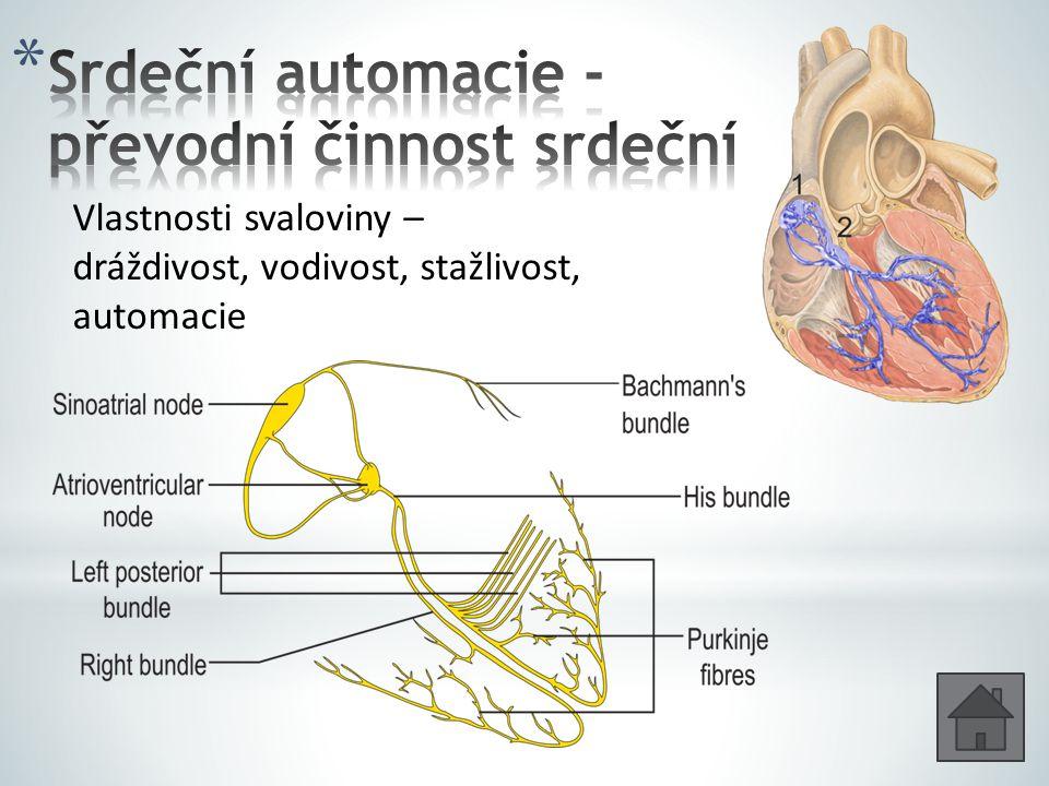 Srdeční automacie - převodní činnost srdeční