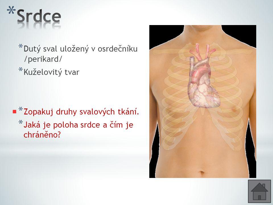 Srdce Dutý sval uložený v osrdečníku /perikard/ Kuželovitý tvar