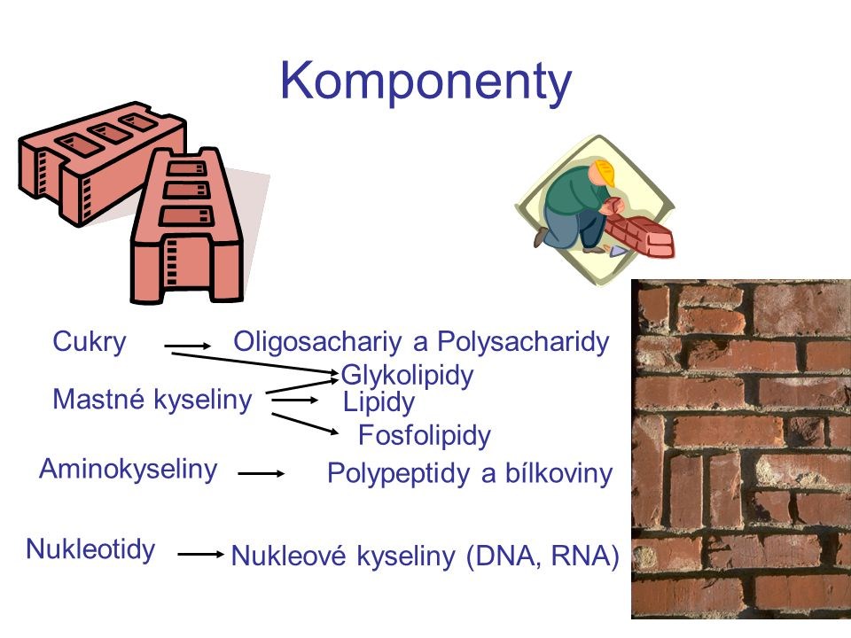 Komponenty Cukry Oligosachariy a Polysacharidy Glykolipidy
