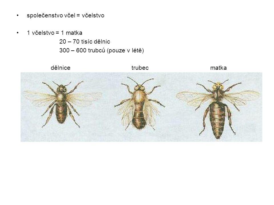 společenstvo včel = včelstvo
