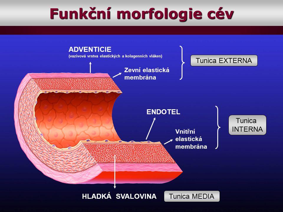 Funkční morfologie cév