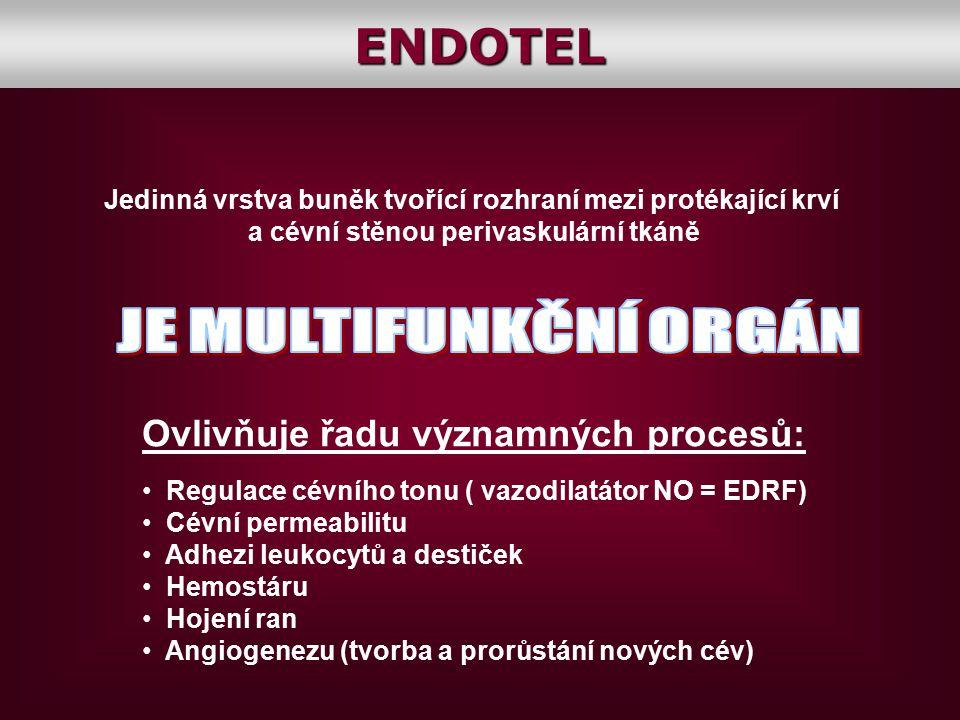 ENDOTEL JE MULTIFUNKČNÍ ORGÁN Ovlivňuje řadu významných procesů: