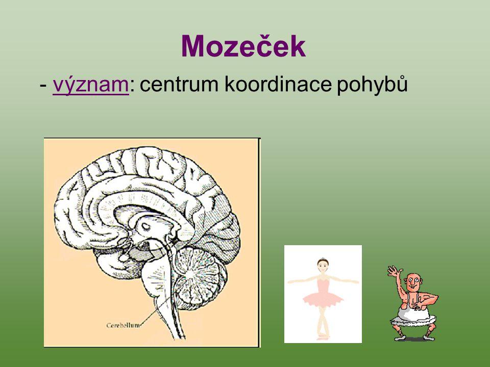 Mozeček - význam: centrum koordinace pohybů