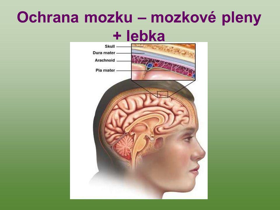 Ochrana mozku – mozkové pleny + lebka