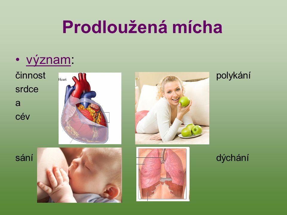 Prodloužená mícha význam: činnost polykání srdce a cév sání dýchání