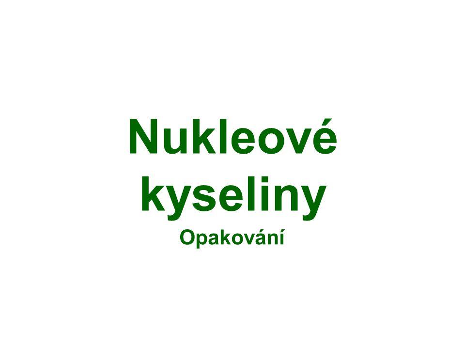 Nukleové kyseliny Opakování
