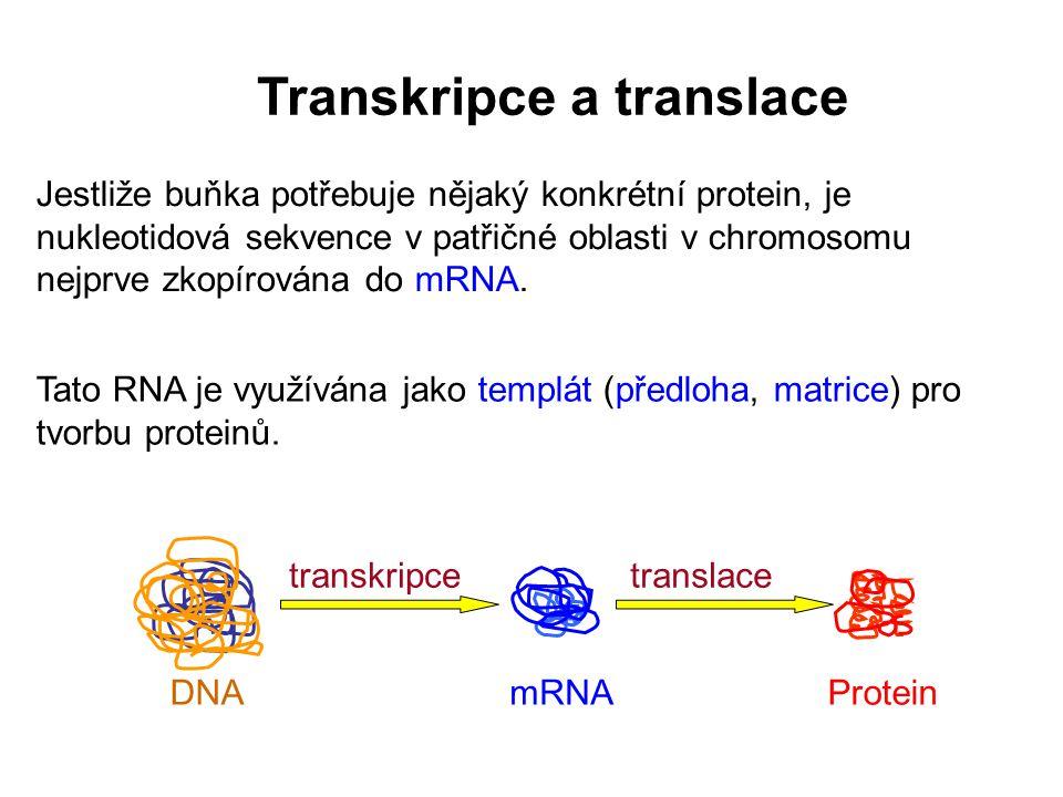 Transkripce a translace