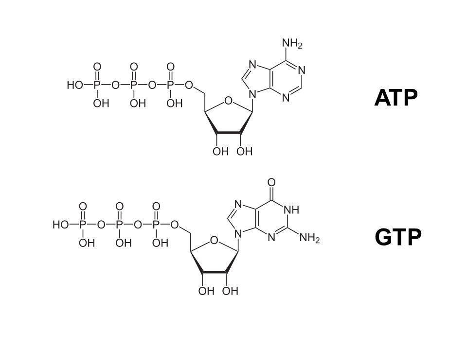 ATP GTP