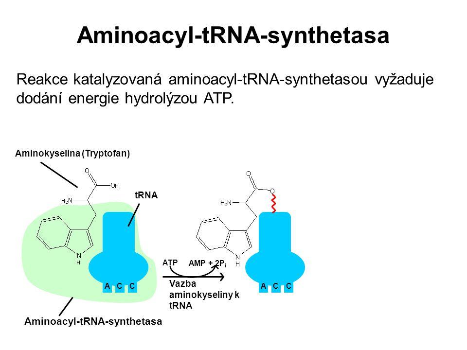 Aminoacyl-tRNA-synthetasa