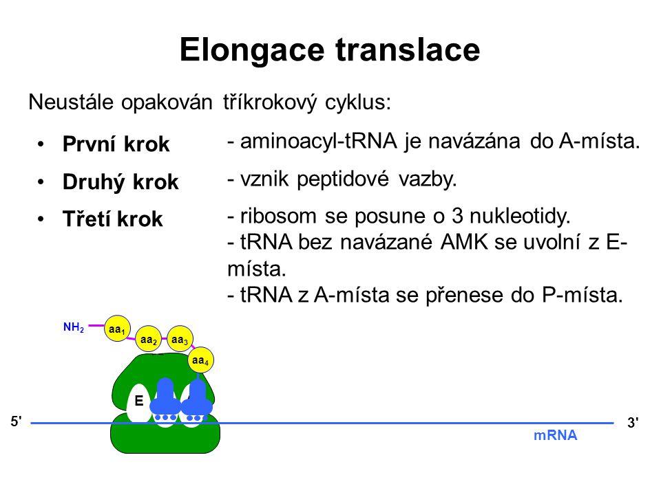 Elongace translace Neustále opakován tříkrokový cyklus: První krok