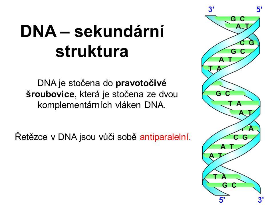 DNA – sekundární struktura