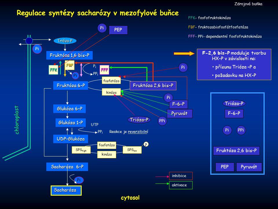 F-2,6 bis-P moduluje tvorbu HX-P v závislosti na: