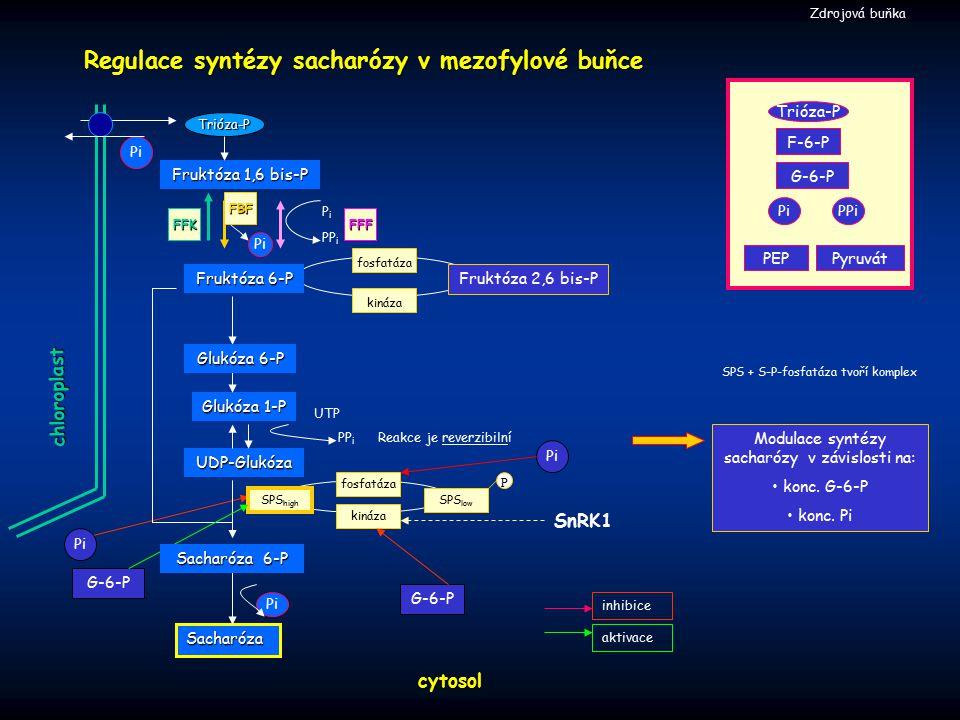 Modulace syntézy sacharózy v závislosti na:
