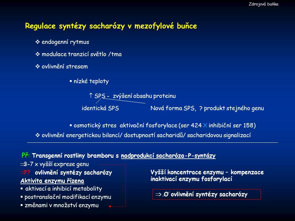 Regulace syntézy sacharózy v mezofylové buňce