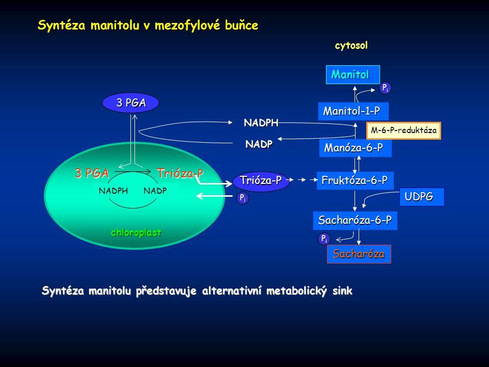 Syntéza manitolu v mezofylové buňce