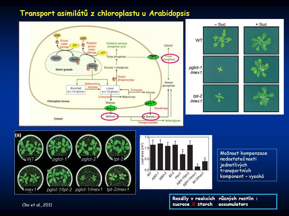 Transport asimilátů z chloroplastu u Arabidopsis