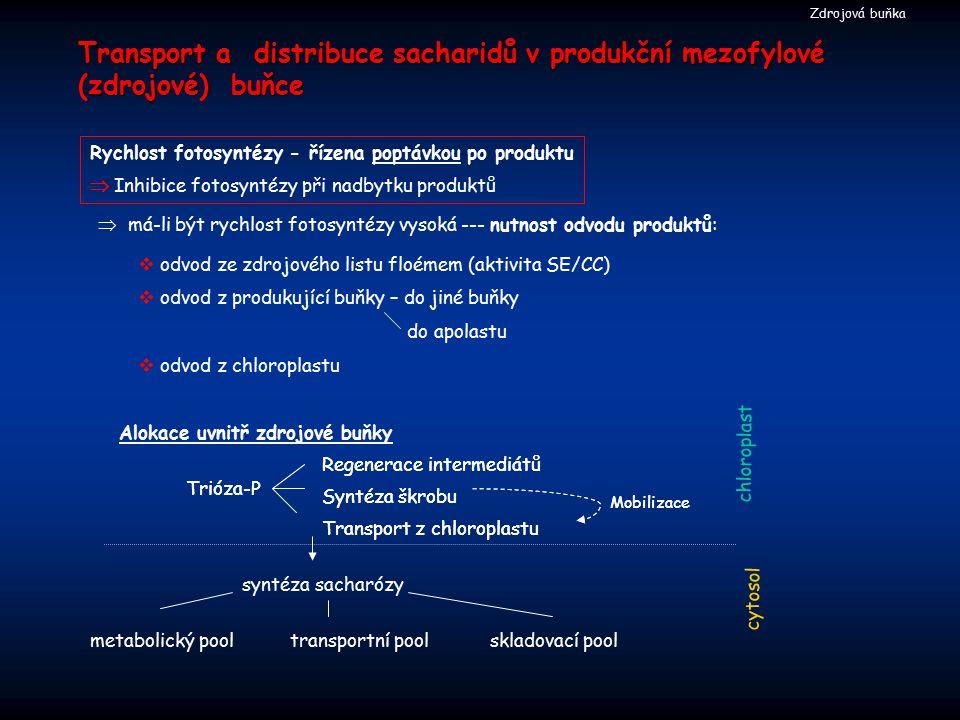 Transport a distribuce sacharidů v produkční mezofylové