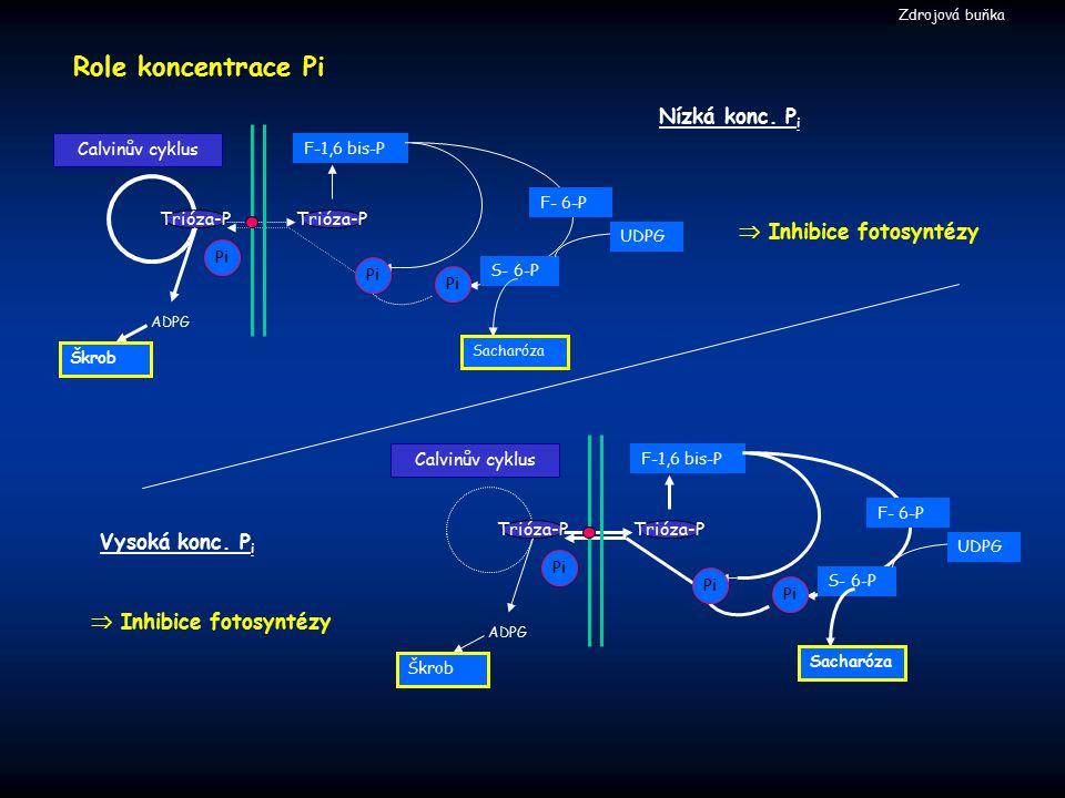 Role koncentrace Pi Nízká konc. Pi  Inhibice fotosyntézy