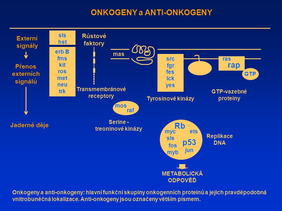 ONKOGENY a ANTI-ONKOGENY rap Rb p53