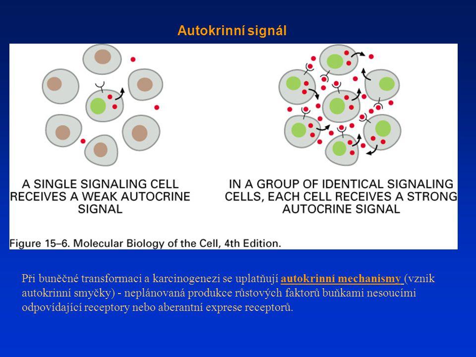 Autokrinní signál