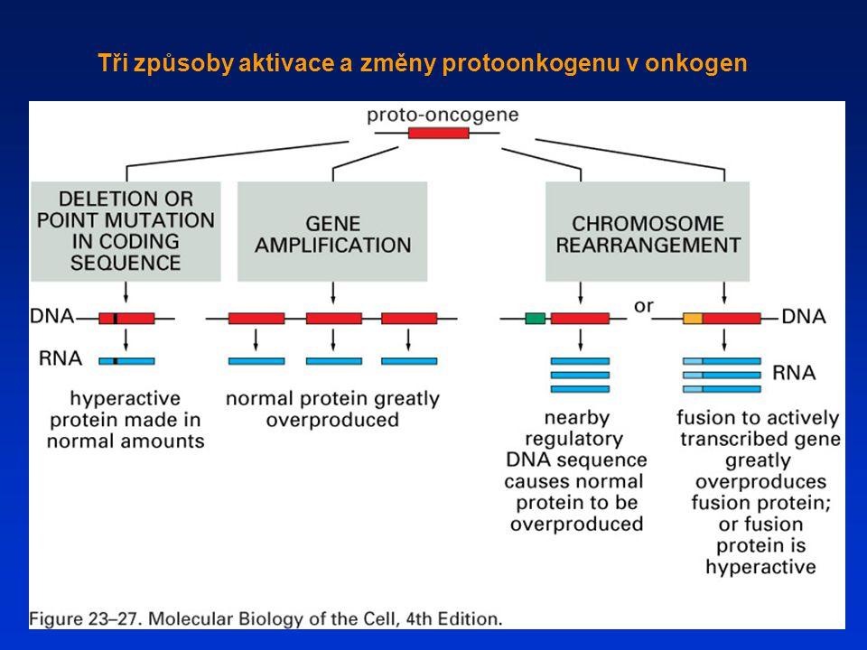 Tři způsoby aktivace a změny protoonkogenu v onkogen