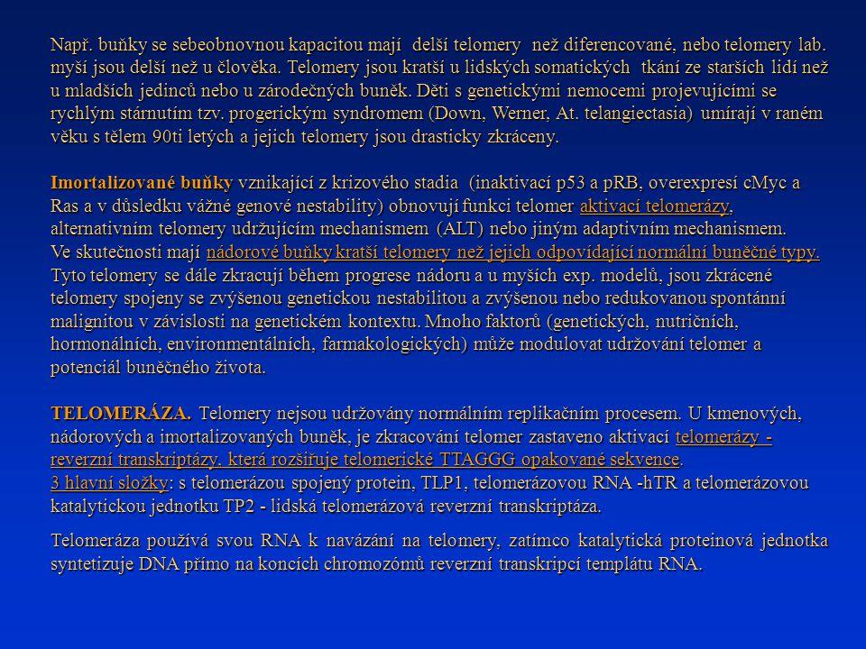 Např. buňky se sebeobnovnou kapacitou mají delší telomery než diferencované, nebo telomery lab. myší jsou delší než u člověka. Telomery jsou kratší u lidských somatických tkání ze starších lidí než u mladších jedinců nebo u zárodečných buněk. Děti s genetickými nemocemi projevujícími se rychlým stárnutím tzv. progerickým syndromem (Down, Werner, At. telangiectasia) umírají v raném věku s tělem 90ti letých a jejich telomery jsou drasticky zkráceny.