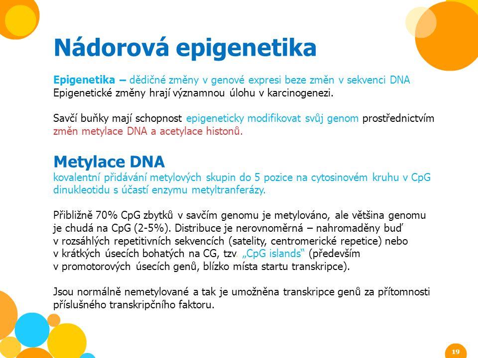 Nádorová epigenetika Metylace DNA