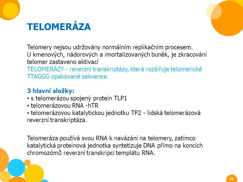 TELOMERÁZA Telomery nejsou udržovány normálním replikačním procesem.