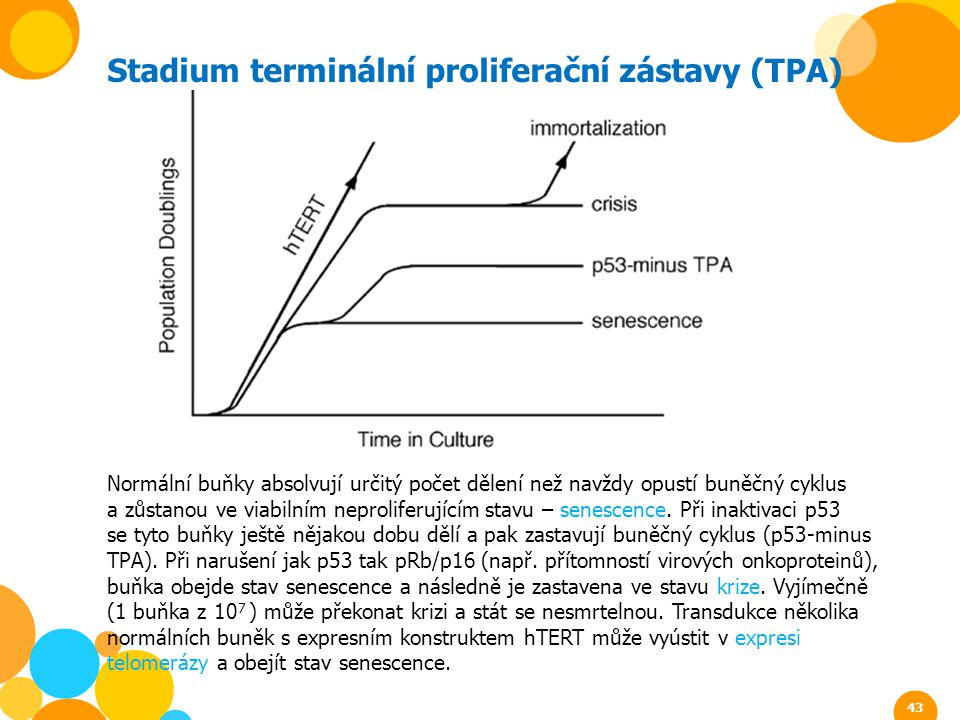 Stadium terminální proliferační zástavy (TPA)