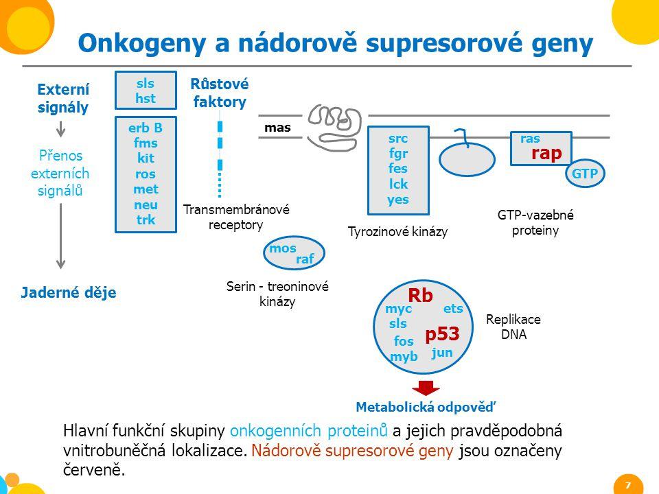 Onkogeny a nádorově supresorové geny erb B fms kit ros met neu trk