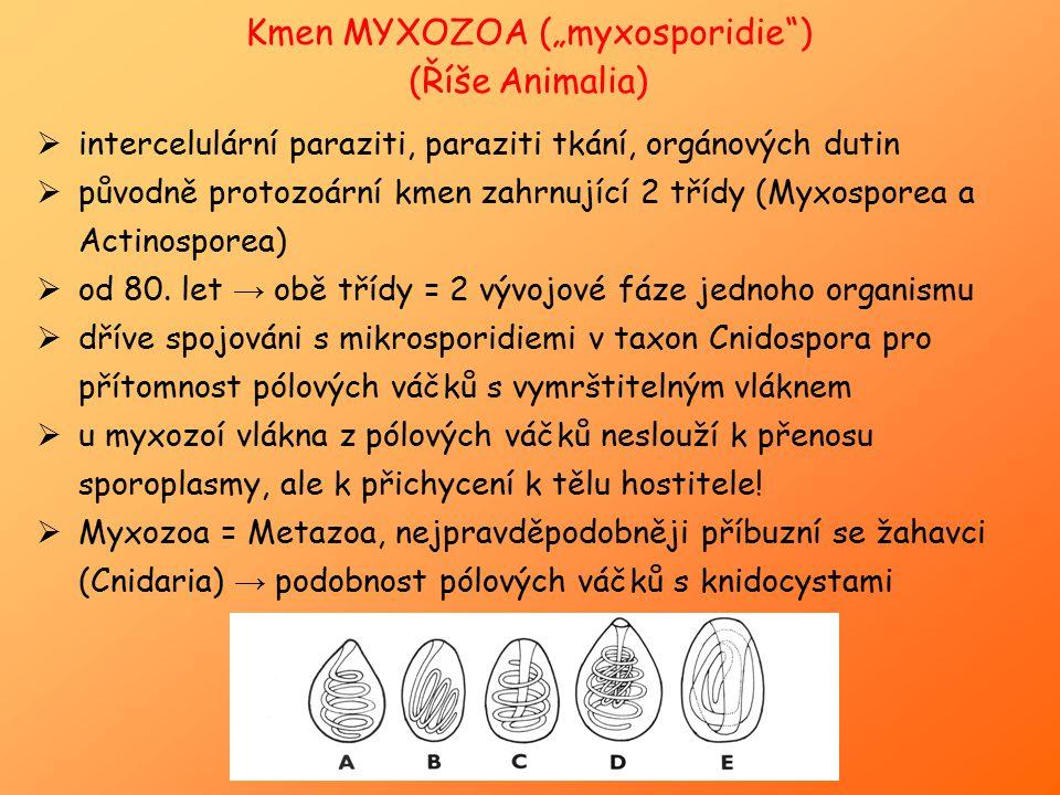 """Kmen MYXOZOA (""""myxosporidie )"""