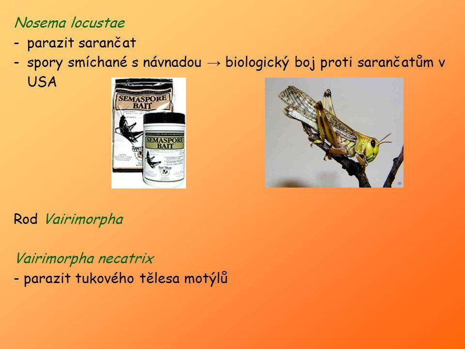 Nosema locustae parazit sarančat. spory smíchané s návnadou → biologický boj proti sarančatům v USA.