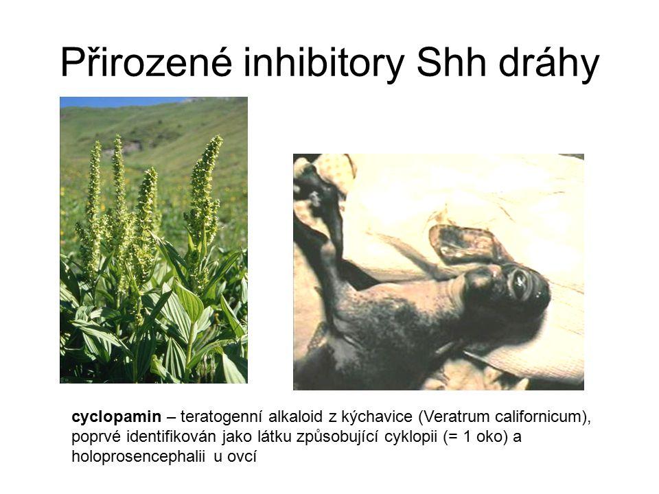 Přirozené inhibitory Shh dráhy
