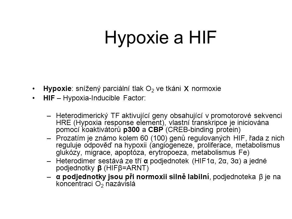 Hypoxie a HIF Hypoxie: snížený parciální tlak O2 ve tkáni x normoxie