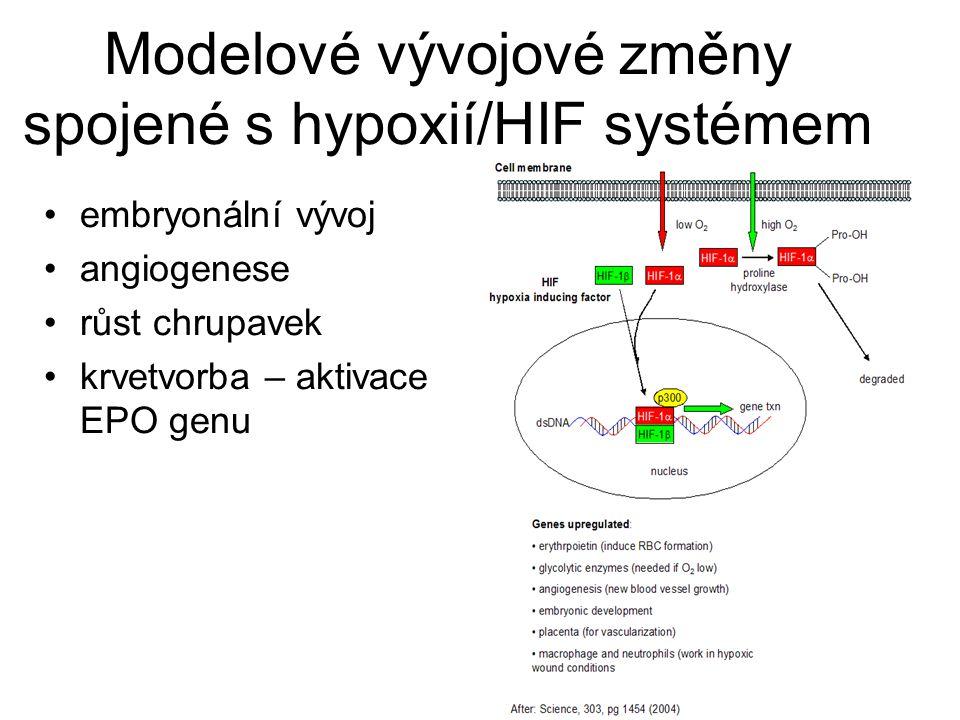 Modelové vývojové změny spojené s hypoxií/HIF systémem